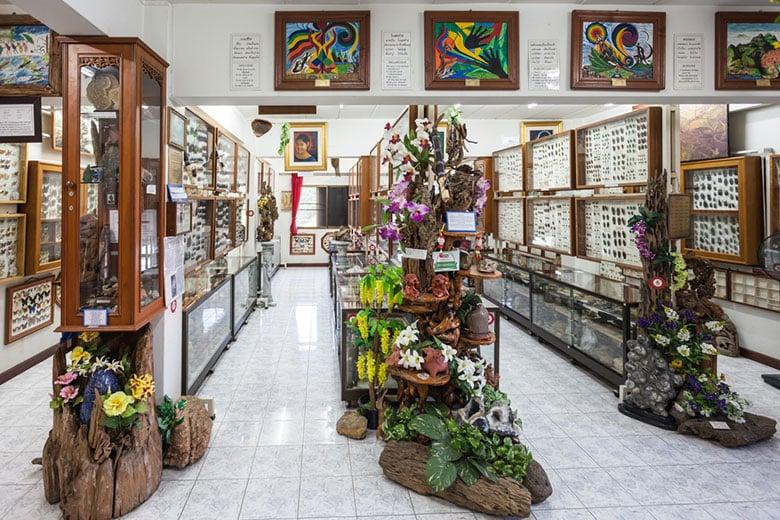 Musée des insectes et des merveilles du monde