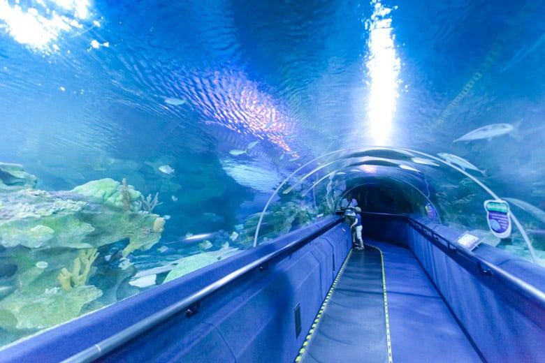 L'Aquarium Aquaria KLCC á Kuala Lumpur