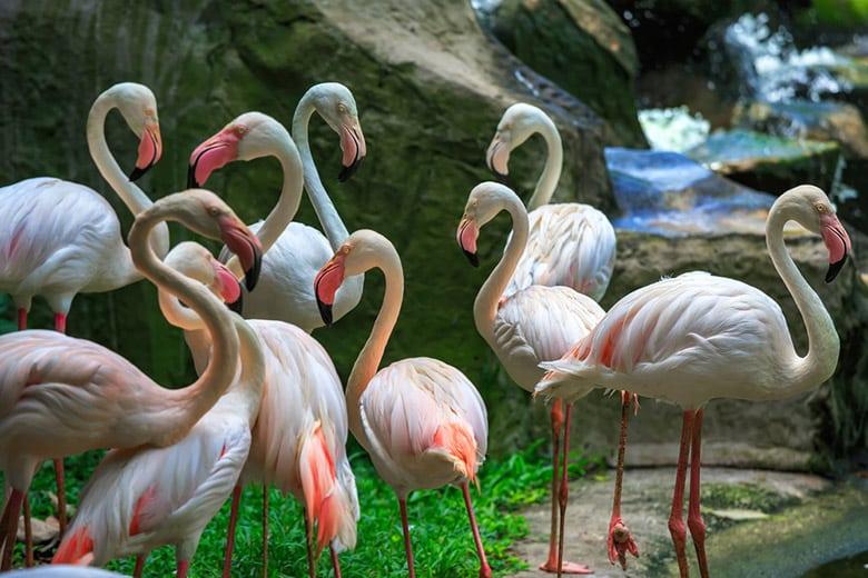 Parc Ornithologique de Kuala Lumpur