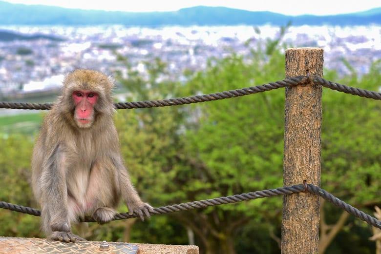 Le Parc de singes Iwatayama á Kyoto