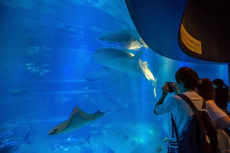 Aquarium Kaiyukan d'Osaka