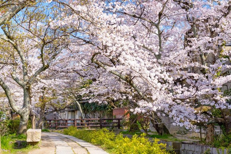 Le chemin des philosophes á Kyoto