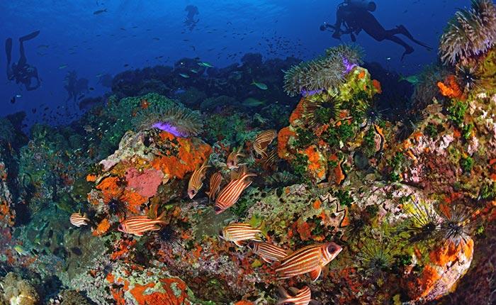 La plongée sous-marine à Koh Tao