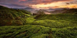 De Singapour aux Cameron Highlands