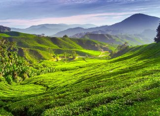 De Penang aux Cameron Highlands